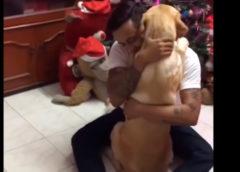 Посмотрите, как трогательно лабрадор обнимает хозяина после операции